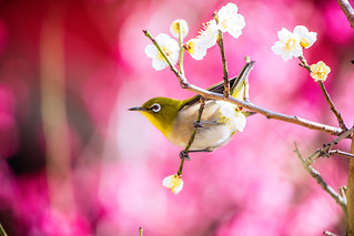 Enjoy the Joys of Spring