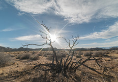 Covington. (Ryan Hallock) Tags: desert joshua tree joshuatree california mojavedesert joshuatreenationalpark nationalparkservice nps yuccavalley highdesert sunset flare beauty outdoors rei gooutside