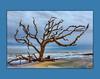Driftwood Beach, Jekyll Island, GA (tvj21) Tags: driftwood driftwoodbeach jekyllisland ocean beach georgia