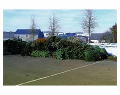 THE PARTY IS OVER # 7 (bruXella & bruXellus) Tags: christmas christmastree belgien belgique belgium belgië leicax1