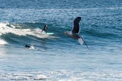 2018-Jan-California-599 (4x4Foto) Tags: 2018 bigsur california deetjensrestaurant emeraldbay january montereybay pacificcoasthighway pacificgrove pacificocean southlaketahoe flowers ocean plants rocks sunset sunshine surf surfing travel trees waves virginia unitedstates