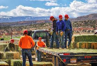 Hay Bales, Henrieville Utah