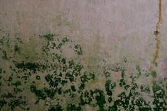 Buchberg (Harald Reichmann) Tags: niederösterreich buchberg sägewerk gebäude ruine verfall geschichte raum zimmer feuchtigkeit pilz besiedelung lebensraum muster