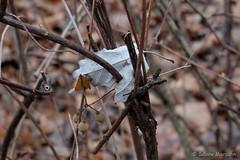 Catched (Sockenhummel) Tags: blatt blätter fenn volksparkwilmersdorf fuji x30 fujifilm finepix leave winter gebüsch strauch park volkspark