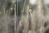 Wintergras (LENS.ART Photographie) Tags: wabisabi d7200 nikon nah natur macro grashalm unscharf gegenlicht norddeutschland