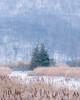 TREES & REEDS (pidalaphoto) Tags: hudsonhighlands ionamarsh winter snow marsh newyork cold hudsonriver stonypointny ionaisland hudsonvalley