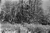 Image 1 22.jpg (DzmitryParul) Tags: kodaktrix400 50mmf12 rodinal1100 canonvtdm 1hour 35mm film blackandwhite