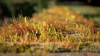 ' fragile mosses'
