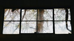 Inside Out Looking (Robert Cowlishaw (Mertonian)) Tags: inside outlooking canonpowershotg1xmarkiii markiii g1x powershot canon robertcowlishaw mertonian branches trees dirtywindow winterwindow windows lonely february