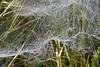 Webs in Wood (Lindsay Duncanson) Tags: northumberland national park webs mist dew heather bog mushroom woods
