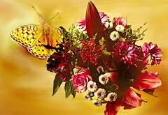Flower Bouquet (evisdotter) Tags: bouquet flowers blommor bukett butterfly 2in1 myart birthday