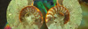 Ammonites (gemportjewellers) Tags: jewelammoliteammonitearagonitebackgroundscalcitechamberscloseupcomplexitycross sectionfossilgemgeological feature geology horizontal intricacy jewelry macro mineral nature naturebackgrounds nautilus nobody paleontology sea shell shiny spiral surfacelevel textured cristals