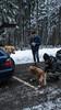 DSC04497 (ax.stoll) Tags: feldberg frankfurt taunus mountain forest snow winter winterwonderland outdoor nature dog hovawart trees street wanderlust travel
