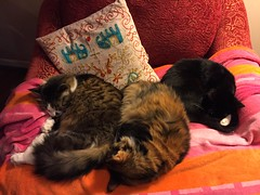 Triple Nappers (Philosopher Queen) Tags: napping chair kayla jade xena kitties snuggling