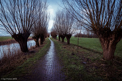 pad with willows (soundmoods) Tags: pad willow thenetherlands river