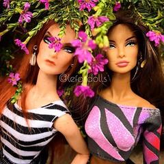 Dolls Le Lima @lelimadm @lefordolls (Le Lima - Designer de Moda) Tags: lovedolls dolls fashion dollstagram dollsoninstagram instadoll dollcollector mydoll barbiecollector barbiegram barbielove dollphotography dollphotogallery mycollection barbiestyle barbie barbiefashion curatedlife socality liveauthentic livefolk finditliveit adventure lifeofadventure thatpnwlife greatnorthcollective communityfirst peoplescreatives wildernessculture