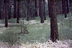 snow dusted forest (Mister.Marken) Tags: snow södertälje madeinsweden nikonf4 digibasec41 fotolaboclub afnikkor50mm filmphotography trees forest expiredfilm