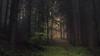 In brighter Times (Netsrak) Tags: baum europa europe landschaft natur nebel wald fog landscape mist nature tree trees woods eifel bäume eu rheinbach nordrheinwestfalen deutschland de