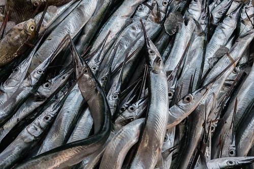Port de pêche de Negombo, Sri Lanka
