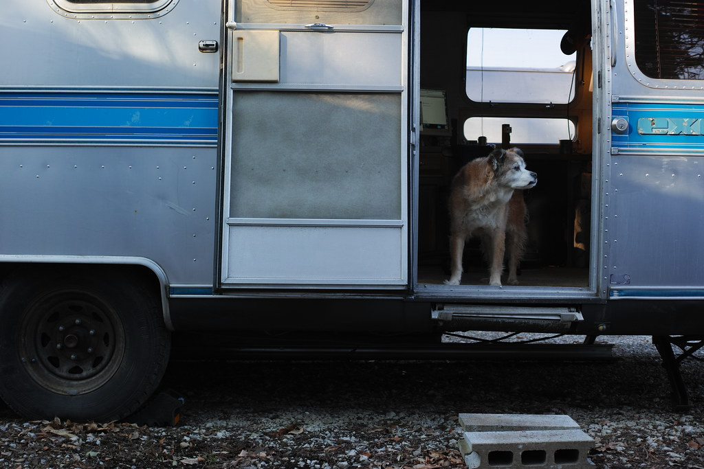 The World 39 S Best Photos Of Airstream And Dog Flickr Hive