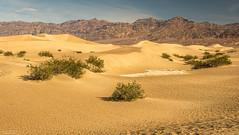 Mesquite Flat Sand Dunes (59roadking - Jim Johnston) Tags: ifttt 500px mountains sand panorama desert hills dunes california death valley
