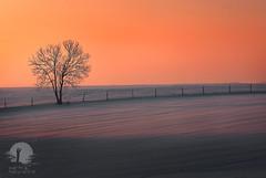 Fence in a sunrise (warmianaturalnie) Tags: nature silhouette tree landscape sky dusk outdoors scenics sunrisedawn orangecolor beautyinnature sunlight horizon morning dawn warmia sunrise snow snowscape warmianaturalnie winter