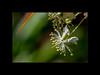 _8500611-Edit-2 (Martin van der sanden) Tags: harry p leu gardens nikon d850 105mm 28 micro
