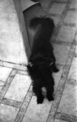 Bolinha (a.ninguem) Tags: pentax k1000 film tmax kodak expired black white filme 35mm analog dog cadela