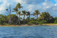 Reserva de la biosfera de Sian Kaan - Mexico (Alphonso Mancuso) Tags: reserva biosfera sian kaan mexico caribe mar azul palmeras tropical nido buitre
