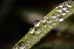 some love... (andreea_muntean) Tags: macro water waterdrops colors green nature plant background depthoffield nikon nikond3200 nikonphotography outdoor focus relaxing photography google flickr 40mm f2 8