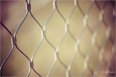 I haven't been this excited about friday since last friday (Peter Jaspers) Tags: frompeterj© 2018 olympus zuiko omd em10 1240mm28 macro hff dof bokeh fence fenced fencedfriday happyfencefriday enci encigroeve sintpietersberg maastricht viewpoint walkway
