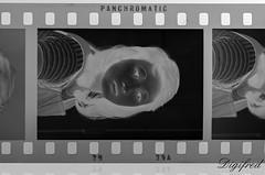 Panchromatic. (Digifred.) Tags: macromondays monochrome digifred 2018 nederland netherlands pentaxk5 hmm macro macrophotography closeup blackwhite blackandwhite people portret portrait girl negatief filmstrook film negative panchromatic