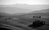 Cipressini in Val d'Orcia - 1 (anto_gal) Tags: toscana siena torrenieri sanquirico valdorcia orcia cipressi bn monocromatico bw