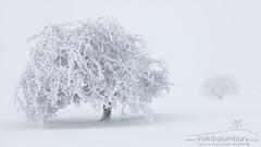 ... (Obikani) Tags: winter snow tree minimal mist white canonikos
