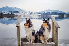 02/12 Leia & Nora, Last stop before returning home (shila009) Tags: perros dogs portrait lake leia nora roughcollies retrato sky natural animal baviera alemania 0212 landscape nature
