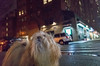 upper west side (Charley Lhasa) Tags: ricohgrii grii 183mm 28mm35mmequivalent iso12800 ¹⁄₈₀secatf28 0ev aperturepriority pattern noflash s000055 dng uncropped taken180219221416 uploaded180301041550 3stars flagged adobelightroomclassiccc72 lightroomclassiccc72 adobelightroom lightroom home newyork unitedstates us charley charleylhasa lhasaapso dog walk night neighborhood rain rainy intersection street upperwestside uws manhattan newyorkcity nyc ny tumblr180301 httpstmblrcozpjiby2vg8ffx