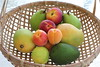 tropical fruits (Gillian Everett) Tags: tropical fruit apricot nectarine mango pear avocado australian newzealand 118 2018 3 365 mdpd2018 mdpd20181
