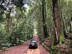 Into the wilderness (Harlz_) Tags: 4wd 4x4 rainforest temperate nsw wilderness dirt track forest australia iphone8 werrikimbe national park