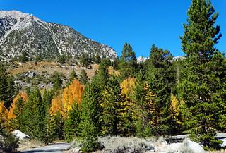Autumn Begins, Rock Creek Canyon, Sierra Nevada, CA 9-16