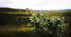 Some bush I found (benjamin.t.kemp) Tags: green bush plant leaves vegetation greenerie