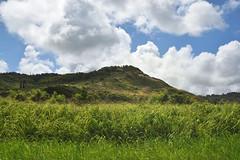 south Kauai (heartinhawaii) Tags: kauai landscape roadside hawaii rural nikond3300 sugarcane