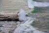DSC_6492.jpg (bobosh_t) Tags: sunsetcliffs california pacificocean ocean
