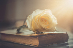 A white rose (RoCafe Off for a while) Tags: stilllife rose flower bloom book old vintage white light textured nikkormicro105f28 nikond600