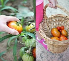 as fresh as... (ggcphoto) Tags: freshness tomatoes picking wicker basket child diptych