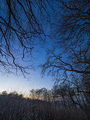 Chiltern blues (Bruce Clarke) Tags: olympus landscape winter woods outdoor hills hammondswood dusk trees m43 silhouette bluehour branches braziers chilternway sky omdem1 barebranches chilterns oxfordshire 714mmf28