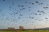 fly-over (stevefge) Tags: 2017 hoogwater nijmegen waal flood winter birds geese flight flock reflectyourworld dijk dike nederland netherlands nl nature natuur nederlandvandaag gelderland