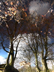 4D (andressolo) Tags: reflection reflections reflected reflect reflejos reflejo ripples stream regato pond puddle water distortions distortion distorted trees epping forest leaves clouds