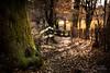 West Road... (Beppe Cavalleri - www.beppecavalleri.com) Tags: bokeh wild beppecavalleri sonya7riii season nature voigtlander4012 colors wwwbeppecavallericom beautiful wonderful winter tree