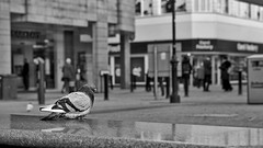 Watching The World Go By . . . (Danielle Davies) Tags: sony bolton north uk a6000 50mm pigeon black white street