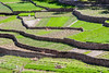 37 Shades of green (Andrea~ac) Tags: biladsayt oman green terraces